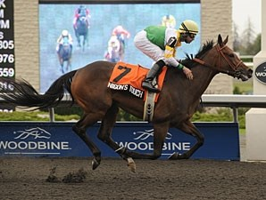 Niigon's Touch wins the 2011 Eternal Search.