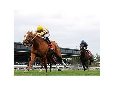 "Wise Dan<br><a target=""blank"" href=""http://photos.bloodhorse.com/AtTheRaces-1/at-the-races-2013/27257665_QgCqdh#!i=2455124905&k=cCh8Qcg"">Order This Photo</a>"