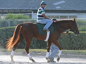 Drosselmeyer at Belmont Park on June 3, 2010.