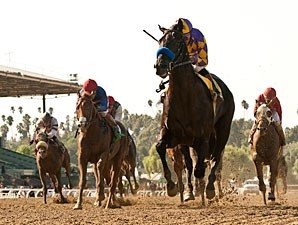 Monument wins the 2012 Bob Benoit CA Cup Juvenile Stakes.