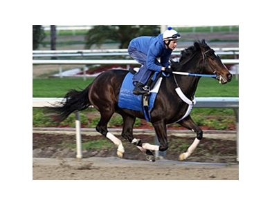 Rachel Alexandra works at Fair Grounds on February 6, 2010.