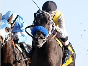 Great Hot wins the 2011 Raven Run.