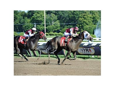 "Transparent (right) and Romansh finished 1-2 in the Curlin Stakes. Romansh was awarded the win via DQ. <br><a target=""blank"" href=""http://photos.bloodhorse.com/AtTheRaces-1/at-the-races-2013/27257665_QgCqdh#!i=2659077835&k=DwJt7N7"">Order This Photo</a>"