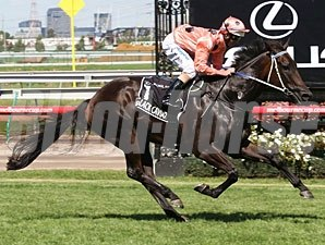 Black Caviar in the Newmarket Handicap, 2011.