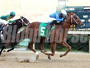 King Henny wins the 2013 Gazebo Stakes.