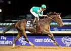 Royal Delta in the Breeders' Cup Ladies' Classic.