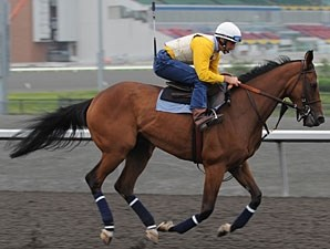 Moment of Majesty at Woodbine on June 9, 2010.