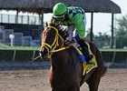 Wildcat Red Breezes at Gulfstream Park