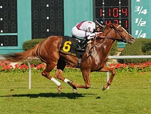Tapicat Makes the Grade in Florida Oaks