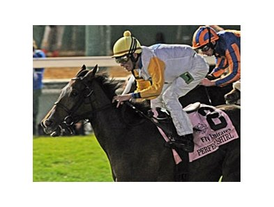 "2011 Breeders' Cup Filly & Mare Turf winner Perfect Shirl<br><a target=""blank"" href=""http://www.bloodhorse.com/horse-racing/photo-store?ref=http%3A%2F%2Fpictopia.com%2Fperl%2Fgal%3Fprovider_id%3D368%26ptp_photo_id%3D9728821%26ref%3Dstory"">Order This Photo</a>"