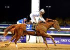 "Drosselmeyer's Breeders' Cup Classic win over Game On Dude<br><a target=""blank"" href=""http://www.bloodhorse.com/horse-racing/photo-store?ref=http%3A%2F%2Fpictopia.com%2Fperl%2Fgal%3Fprovider_id%3D368%26ptp_photo_id%3D9729180%26ref%3Dstory"">Order This Photo</a>"