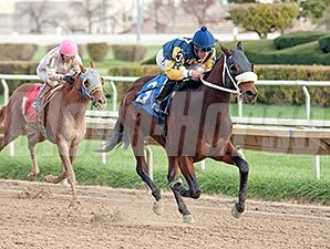 Rambling Richie wins the 2013 Sun Power Stakes.