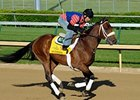 Optimizer at Churchill Downs.