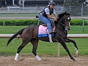 Rachel Alexandra at Churchill Downs, April 30 2009.