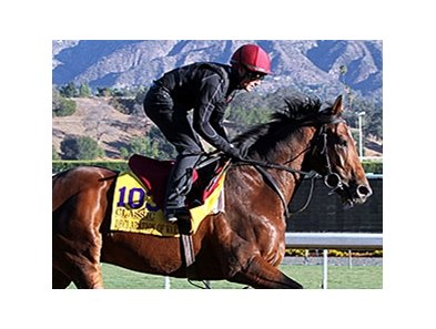 "Declaration of War made his first appearance on the track at Santa Anita Park Thursday morning.<br><a target=""blank"" href=""http://photos.bloodhorse.com/BreedersCup/2013-Breeders-Cup/Breeders-Cup/32986083_QMHXWK#!i=2873866530&k=4ptDWCQ"">Order This Photo</a"
