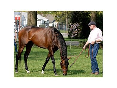 Colonel John grazing with trainer Eoin Harty.