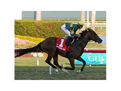 "Duke of Homberg powers home in the Hallandale Beach at Gulfstream.<br><a target=""blank"" href=""http://www.bloodhorse.com/horse-racing/photo-store?ref=http%3A%2F%2Fpictopia.com%2Fperl%2Fgal%3Fprovider_id%3D368%26ptp_photo_id%3D7752330%26ref%3Dstory"">Order This Photo</a>"