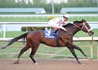 "Trickmeister is undefeated in 5 starts.<br><a target=""blank"" href=""http://www.bloodhorse.com/horse-racing/photo-store?ref=http%3A%2F%2Fpictopia.com%2Fperl%2Fgal%3Fprovider_id%3D368%26ptp_photo_id%3D9779601%26ref%3Dstory"">Order This Photo</a>"