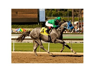 Creative Cause is one of 2 grade I winners in the San Felipe.