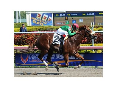 "Cerro was an allowance winner on January 26.<br><a target=""blank"" href=""http://photos.bloodhorse.com/AtTheRaces-1/at-the-races-2013/27257665_QgCqdh#!i=2337167084&k=fbLjfTL"">Order This Photo</a>"