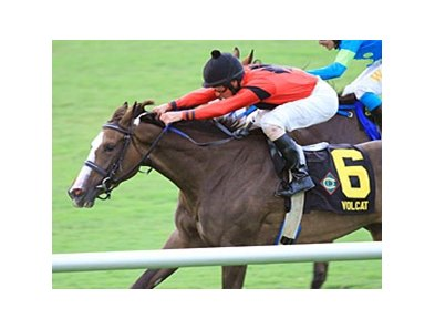 Volcat won the Virginia Oaks on July 21 at Colonial Downs.