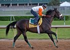 Musket Man Likely for Preakness