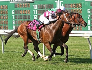 Perfect Officer wins the Wolf Hill Stakes.