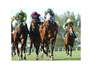 Stormalory (center, maroon silks) was a close third in the Palm Beach Stakes at Gulfstream Park.