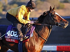 Dank gallops at Santa Anita for Breeders Cup, 2013
