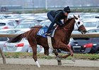 Groupie Doll breezed a half mile Nov. 16 on the Belmont Park training track.