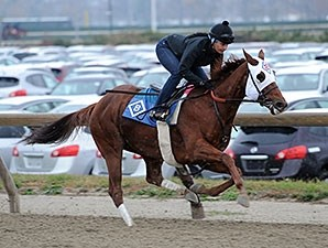 Groupie Doll works at Belmont Park on November 16, 2013.