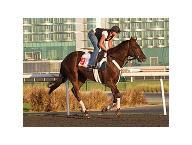 Fly Down at Meydan Race Course on March 23.