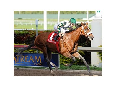 Mucho Macho Man is the 2-1 morning line favorite for the Alysheba Stakes.