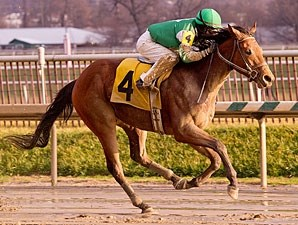Alpha Mike Foxtrot wins the 2012 Maryland Juvenile Championship Stakes.