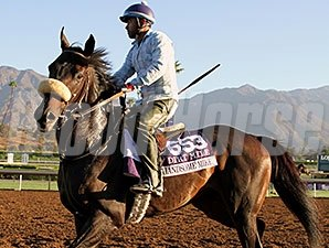 Handsome Mike - Breeders' Cup 2014.