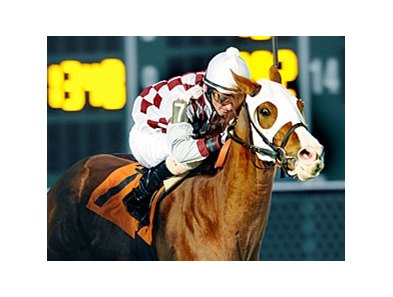 Acting Zippy won the John B. Connally Turf Handicap on January 30 at Sam Houston.