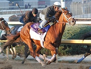 Smiling Tiger works at Churchill Downs on October 30, 2010.
