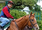 "The status of Casino Drive, the 7-2 second-choice for Saturday's Belmont Stakes is in doubt.<br><a target=""blank"" href=""http://www.bloodhorse.com/horse-racing/photo-store?ref=http%3A%2F%2Fpictopia.com%2Fperl%2Fgal%3Fprovider_id%3D368%26ptp_photo_id%3D4748581%26ref%3Dstory"">Order This Photo</a>"