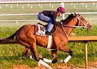 Done Talking worked 4 furlongs at Laurel Park on April 21.