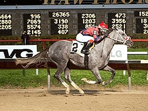 Sasy Ms Elizabeth wins the 2013 Showtime Deb Stakes.