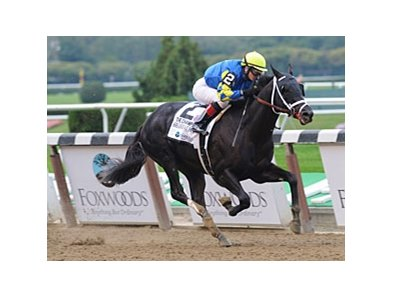 "Shanghai Bobby was a perfect 5 for 5 in 2012.<br><a target=""blank"" href=""http://photos.bloodhorse.com/AtTheRaces-1/at-the-races-2012/22274956_jFd5jM#!i=2132606386&k=pXH95gj"">Order This Photo</a>"