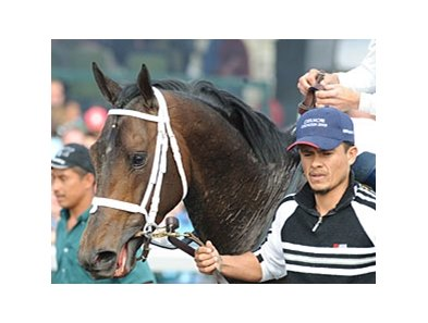 Florida-bred Advice is the only 2009 Kentucky Derby entrant bred outside of Kentucky.