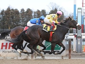 Singlet wins the 2012 Dearly Precious.