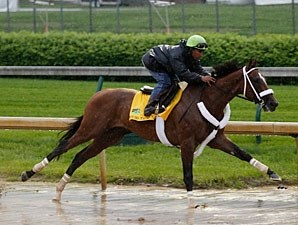 Mucho Macho Man works at Churchill Downs.