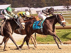 My Magician wins the 2014 Maryland Million Lassie Stakes.