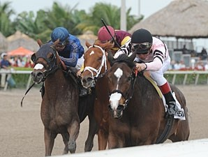 Devil's Cave wins the 2013 Ocala Stakes.