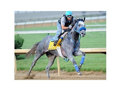 "Creative Cause<br><a target=""blank"" href=""http://photos.bloodhorse.com/TripleCrown/2012-Triple-Crown/Works/22611108_LR3wcn#!i=1823294426&k=7tXSJXR"">Order This Photo</a>"