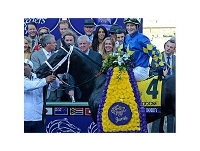 "2-year-old Champion Shanghai Bobby heads the list of Triple Crown nominees.<br><a target=""blank"" href=""http://photos.bloodhorse.com/BreedersCup/2012-Breeders-Cup/Juvenile/26130125_Wz4K8f#!i=2194431604&k=nNWZGcW"">Order This Photo</a>"
