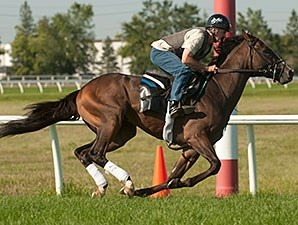 Ami's Holiday - Woodbine, August 14, 2014.