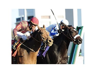 "Dakota Phone (left) catches Morning Line at the wire in the Breeders' Cup Dirt Mile.<br><a target=""blank"" href=""http://www.bloodhorse.com/horse-racing/photo-store?ref=http%3A%2F%2Fpictopia.com%2Fperl%2Fgal%3Fprovider_id%3D368%26ptp_photo_id%3D9267444%26re"